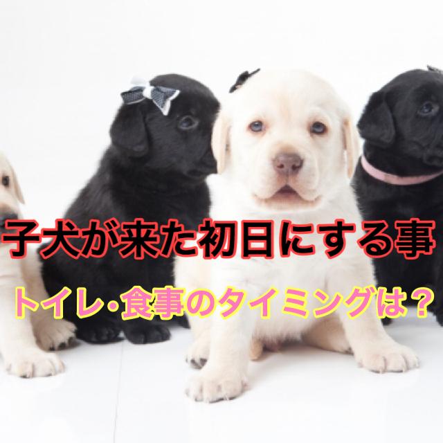 【ドキドキ!】子犬が来た初日にする事と注意点まとめ!トイレや食事のタイミングは?