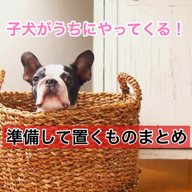 【重要度別!】子犬を迎える日までに準備しておきたい物まとめ!余裕を持って歓迎しよう!