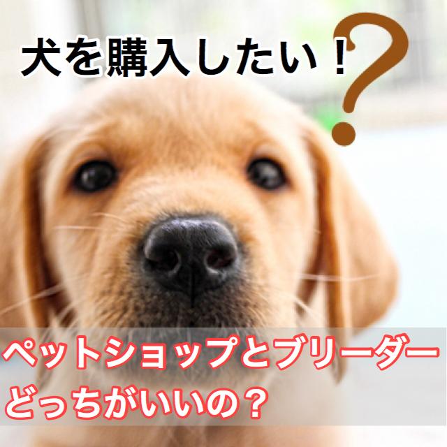 犬を購入したい!ペットショップとブリーダーどっちを選ぶ?信頼できるペットショップの選び方。