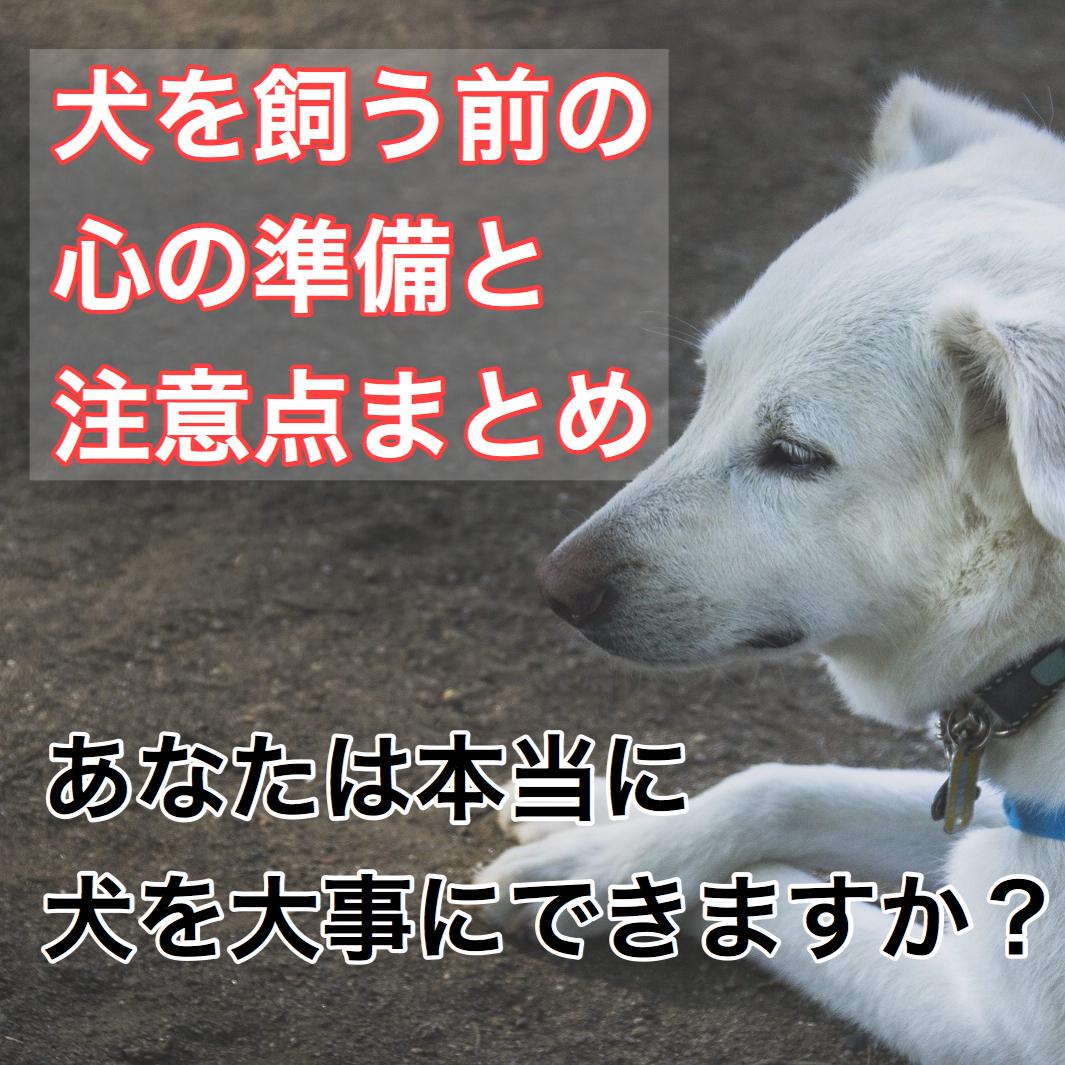 【犬を飼う前に考えておこう!】犬を飼いたい!でも本当に飼える?心の準備と注意点。心構え。