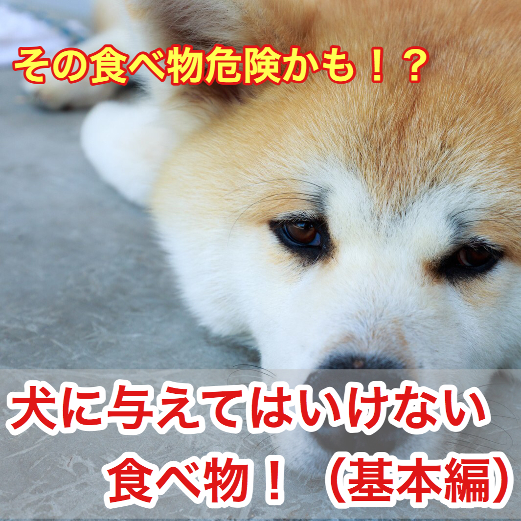 犬に与えてはいけない・食べてはいけない食べ物!その食べ物危険かも?(基本編①)