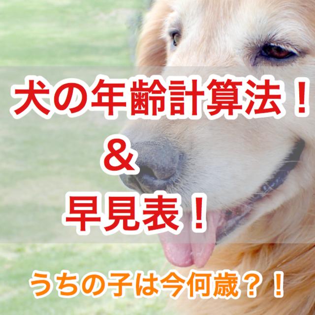 【あなたの犬は何歳ですか?】犬年齢の数え方と早見表!小型犬・中型犬・大型犬別!シニアっていつから?