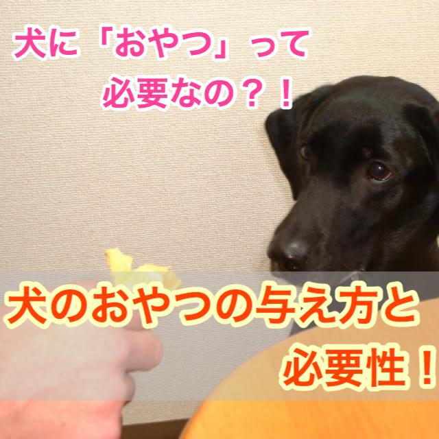 おやつのあげ方と選び方!犬に間食は必要?!いつからあげてもいいの?あげるときのポイントは?!