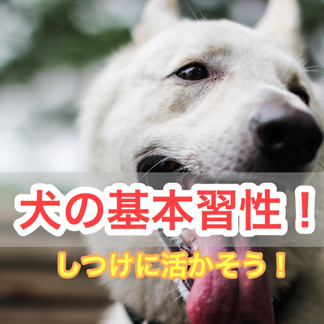 犬の基本的な習性を理解して犬との信頼関係を高めよう!マーキング・穴掘り・匂いを嗅ぐ意味は?