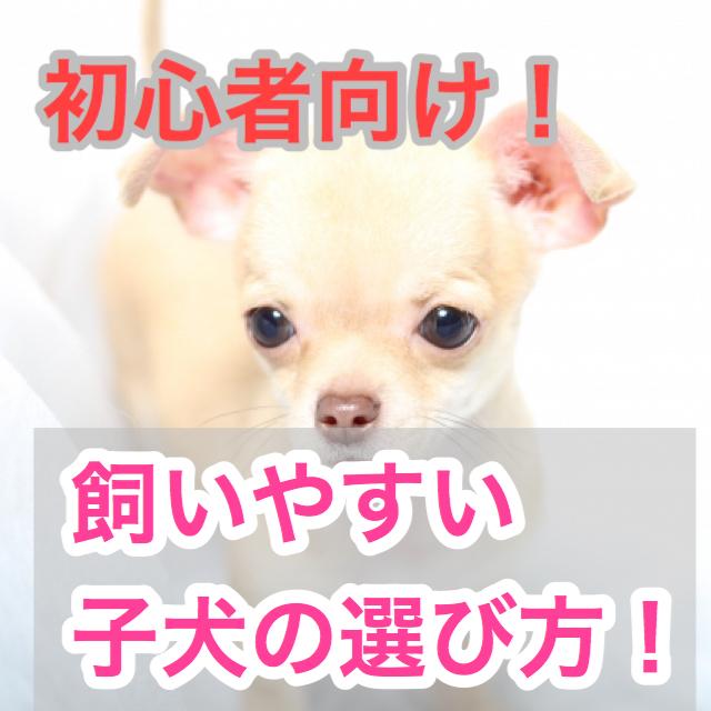 【初心者向け!】健康な子犬の選び方!初心者は飼いやすい性格の子犬を選ぼう!