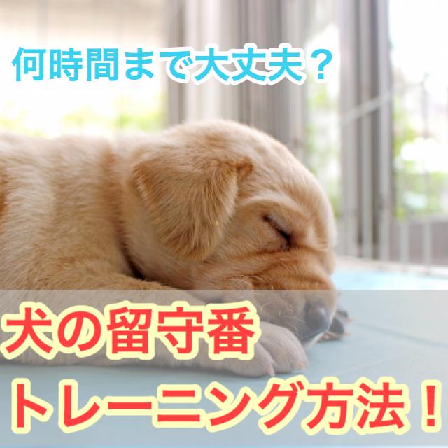 【あなたの愛犬は大丈夫?】犬のお留守番トレーニング!しつけのやり方は?何時間まで大丈夫?