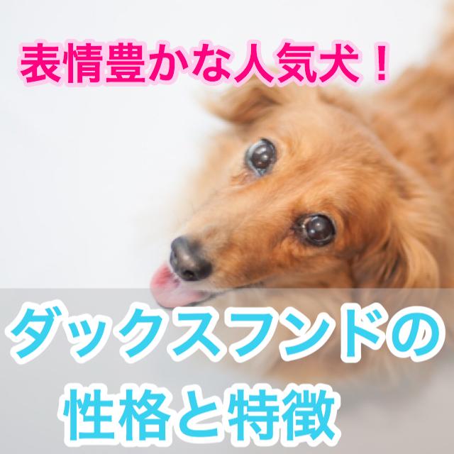 【表情豊かな人気犬!】ダックスフンドの種類と性格。カニンヘンとは?毛色の種類も豊富?!