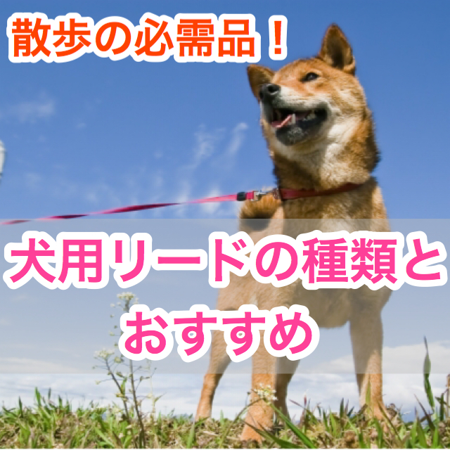 散歩の必需品!犬用リードの種類とおすすめ。たすき掛けタイプや多頭用も?!