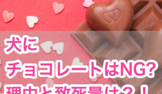 【バレンタインデーまであと少し!】犬にチョコレートはNG?理由と致死量!テオブロミン含有量まで。