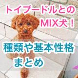 【大人気のMIX犬!】トイプードルとのミックス犬の種類・特徴・基本性格まとめ。見た目はどっちに似るの?!