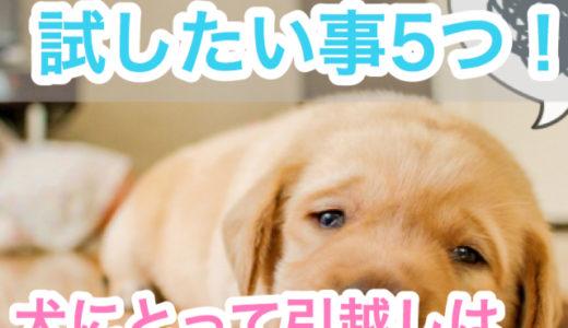 【犬との引越し!】引越しは犬にとってストレスなの?不安を軽減させるために試したい事5つ!