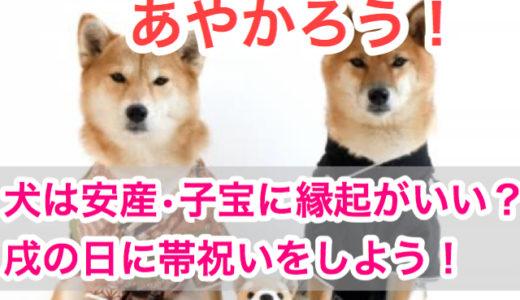 【戌年にあやかろう!】犬は安産や子宝に縁起がいいって本当?!帯祝いと戌の日安産祈願の方法!