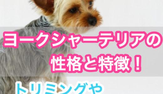 【リボンが一番似合う犬種!】ヨークシャーテリアの性格と特徴。トリミングの頻度やラッピングとは?