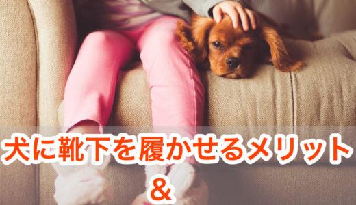 【犬は靴下大好き!?】靴下を履かせる理由とメリット。おすすめの靴下・靴3選!