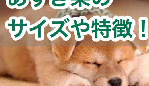 あずき柴の性格と特徴!成犬時のサイズや価格は?【赤ちゃんみたいな柴犬?!】