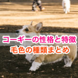 コーギーの性格・特徴・毛色の種類!ペンブローク・カーディガンとは?!