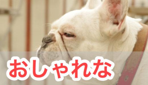 おしゃれな犬の首輪(カラー)おすすめ5選!丈夫でプレゼントにも最適